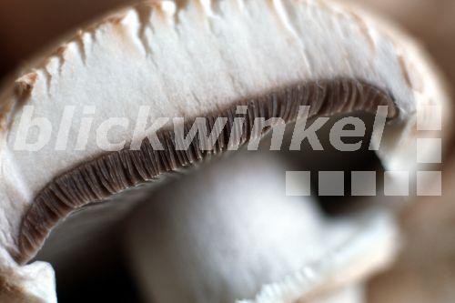 blickwinkel zweisporiger champignon zucht champignon zuchtchampignon agaricus bisporus. Black Bedroom Furniture Sets. Home Design Ideas