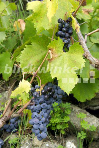 Echter Wein