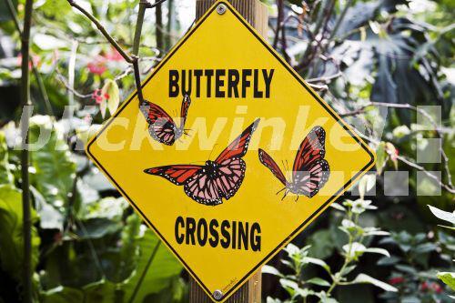 Schmetterlingshaus Nrw