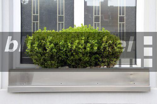 blickwinkel gewoehnlicher buchsbaum buxus sempervirens. Black Bedroom Furniture Sets. Home Design Ideas